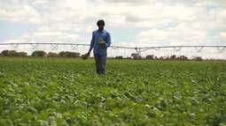 Produtor rural adota novas medidas para recuperar solo e evitar pragas em lavouras