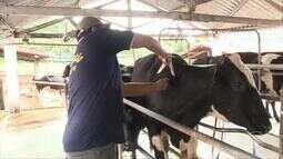 Fique por dentro dos principais eventos pelas regiões rurais do Piauí