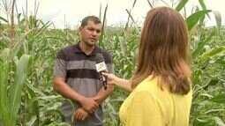 Agricultores do Ceará já se preparam para colher as primeiras safras do ano