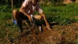 Prefeitura de Coronel Fabriciano oferece análises de solos gratuitas para produtores