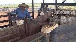 Exportação da carne rondoniense é sinal de segurança sanitária para os consumidores