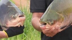 Parte 1: Conheça projeto que auxilia na detecção de doenças em peixes
