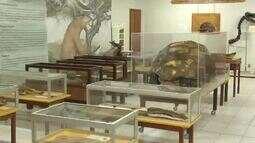 Ufac comemora 35 anos do Laboratório de Pesquisas Paleontológicas