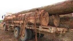Cerca de 50M³ de madeira foram apreendidos pela polícia ambiental de Ji-Paraná