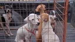 Cães são resgatados desnutridos e doentes em Cuiabá