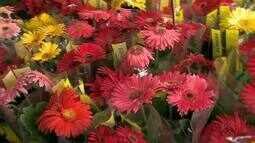 Produtor de Holambra orienta juiz-foranos sobre como cuidar de flores e plantas