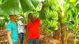 Interior potiguar comemora plantação de aspargo