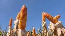 Veja as notícias do agronegócio, nesta quinta, 21