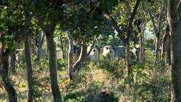 Queimadas e desmatamento representam perigo para os animais silvestres em Uberaba