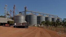 Fazendas suspendem a colheita do milho por falta de espaços para armazenagem