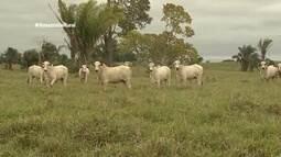 Parte 1: Acre e Rondônia são os primeiros estados a erradicar a febre aftosa com vacinação