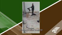 Onça jaguatirica é encontrada em banheiro de igreja, na cidade de Dias D'Ávila