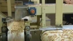 Produtores de amendoim no noroeste paulista comemoram colheita deste ano