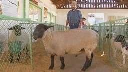 Criadores da região mostram na Expô de Araçatuba o avanço na genética animal