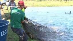 Parte 2: Pescados de Rondônia são beneficiados para agroindústrias