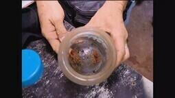 Escorpiões são encontrados em condomínio em Uberlândia