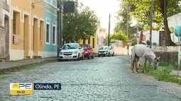 Cavalos são flagrados soltos em área turística de Olinda