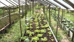 Veja como eliminar manchas brancas em hortaliças