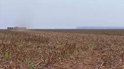 Começa o plantio de soja em Mato Grosso