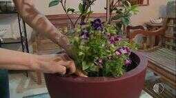 Para entrar no clima da Primavera aprenda a cultivar as flores da estação