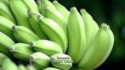 Queda nas vendas de banana preocupa produtores no Triângulo Mineiro