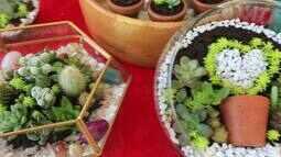 Saiba como cultivar mini cactos em sua casa