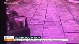 Ministério Público denuncia mulher pelo desaparecimento da gata da vizinha