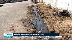 Casos de dengue e chikungunya caem 90% em relação ao ano passado em Fortaleza