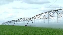 Produtores rurais investem em sistema de irrigação no Triângulo Mineiro