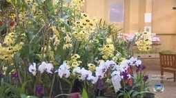 Feira reúne exposição de orquídeas e presépios durante o feriado em Itu
