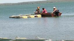 Coema aprova licenciamento ambiental para cultivo da tilápia em tanques no rio Tocantins