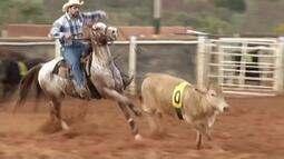 Paixão pelo cavalo transforma Minas Gerais o maior criador do país