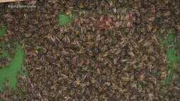 Enxame de abelhas deixa pessoas feridas e mata cavalo em Rio Pardo