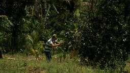 Projeto estuda melhorias para produção de frutas em Santana do Mundaú