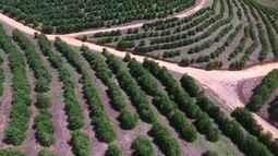 Plantio é uma fase importante para uma boa produção de café, ES