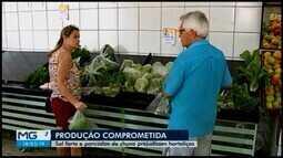 Sol e chuva prejudicam produção de hortaliças em Araxá