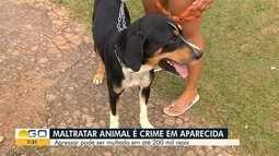 Lei que prevê multa de até R$ 200 mil para quem maltratar animais entra em vigor