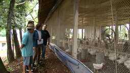 Estudantes inventam sistema de ventilação de baixo custo para aviários