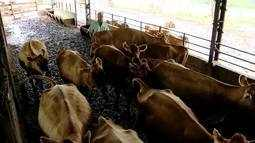 Custo da produção preocupa produtores de leite no Triângulo Mineiro