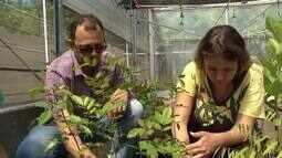 Pesquisadores da UFVJM pesquisam formas de amenizar impactos na natureza pelos agrotóxicos