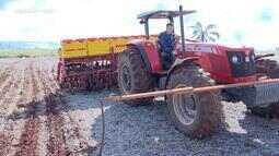 Começa a época de plantio da canola na região noroeste do RS