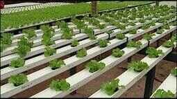 Hortaliças cultivadas no sistema de hidroponia ganham mercado em Araxá