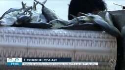 Defeso da sardinha vai até 31 de julho em Angra dos Reis