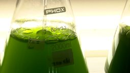 Pesquisa descobre que algas podem ajudar a produção agrícola