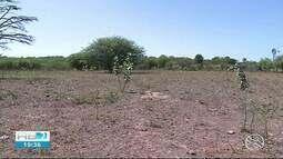 Agricultores perdem parte da plantação no Sertão de Pernambuco
