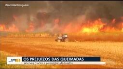 Queimadas deixam animais mortos e plantações destruídas em Goiás