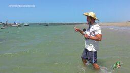 As mais diversas atrações da Praia da Baleia (bloco 1)