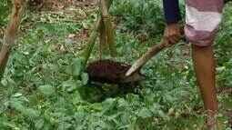 Conheça uma produção de húmus de minhoca em Cabo Frio, no RJ