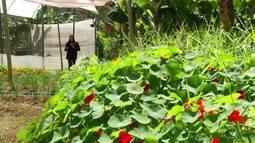 Conheça uma produção de flores comestíveis em Itaipava, em Petrópolis, no RJ