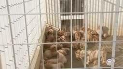 Polícia de Rio Preto resgata 66 cães de raça após denúncia de maus-tratos